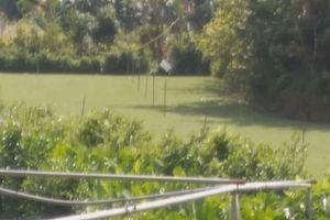 Bơm nước chống ngập cho cỏ, nam thanh niên bị điện giật tử vong