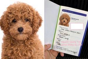 Đưa boss đi chụp ảnh thẻ chuẩn quốc tế làm giấy khai sinh, anh chàng khiến cộng đồng mạng phát cuồng