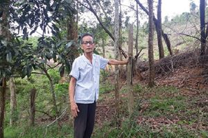 Nghệ An: Thu hồi gần 10.000ha đất nông lâm trường