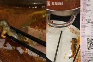 Khách phát hiện chuột chết trong nồi lẩu, nhà hàng tuyên bố một câu xanh rờn