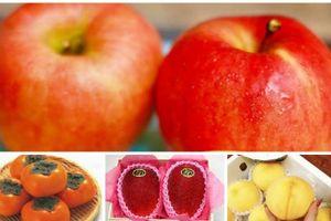 Những loại trái cây xuất xứ Nhật Bản chỉ dành riêng cho giới nhà giàu Việt
