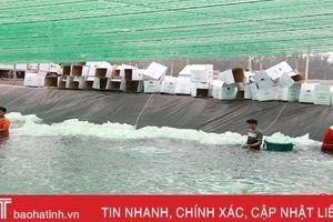 Hà Tĩnh: Xuống giống gần 850 ha nuôi tôm vụ mới