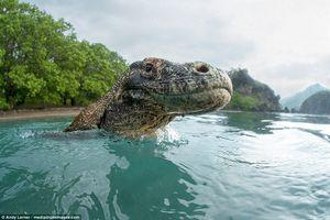 Cận cảnh loài rồng Komodo dưới ống kính nhiếp ảnh gia Mỹ