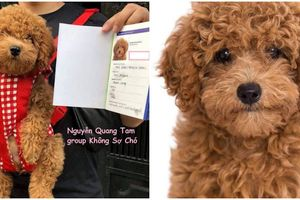 Chuyện lạ có thật: thanh niên chụp ảnh thẻ, đi làm giấy khai sinh cho cún cưng