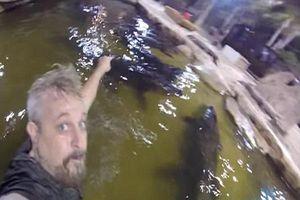 Rùng mình clip người đàn ông bơi lội cùng đàn cá sấu cỡ lớn