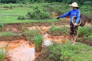 Liên quan đến sự cố tràn hồ chứa nước bùn đỏ Nhà máy Alumin Nhân Cơ