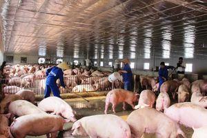 Tiêu độc khử trùng xe chở heo để phòng chống dịch tả lợn Châu Phi