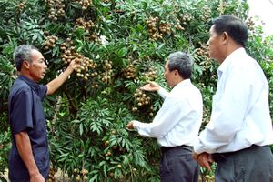 Trái cây vượt 'rào cản' xuất khẩu