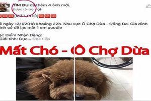 Chó cưng đi lạc, thanh niên chạy cả QC Facebook để tìm