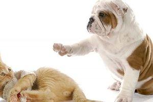 Vì sao 'Mèo đến nhà thì khó, chó đến nhà thì sang'?