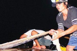 Hành trình trắng đêm theo dấu 'săn' cá bông lau trên sông Vàm Nao