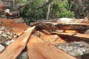 Vụ phá rừng ở Phú Yên: TAND cấp cao tại Đà Nẵng hủy bản án sơ thẩm