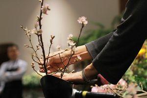 Triển lãm 50 loài hoa độc đáo của Nhật Bản xuất hiện tại Hà Nội