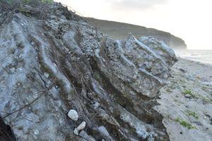 'Nghĩa địa' san hô hóa thạch 'độc nhất vô nhị' ở Việt Nam