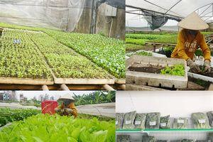 Thăm vườn rau hữu cơ '6 không'
