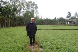 Độc đáo mô hình trồng rau răm và trang trại tổng hợp đầu tiên ở TP.Huế, thu tiền tỷ/năm