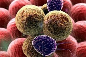 6 loại sinh tố cực tốt cho các bệnh nhân đang điều trị ung thư
