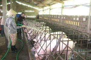 Phải sửa ngay quy định về nước thải chăn nuôi!
