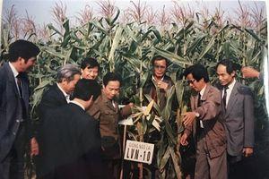GS.TSKH Trần Hồng Uy - cây đại thụ của ngành ngô Việt Nam
