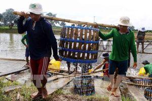 Ngành cá tra hướng tới mục tiêu 2 tỷ USD năm 2018