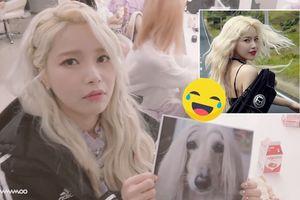 Lột xác trong MV hit mới, Solar (Mamamoo) được fan tặng chân dung hình… chó