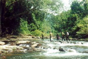 Bắc Giang: Tăng cường lực lượng 'bảo vệ rừng tại gốc'