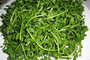 Rau đắng - món rau thanh mát, giải nhiệt mùa hè