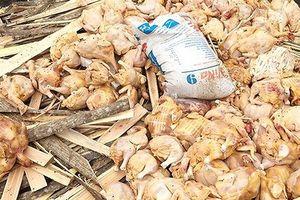 Chở gần 5 tạ thịt gà bốc mùi hôi thối đi bán bị phạt 10 triệu đồng