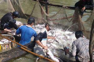 Cẩn trọng khi xuất khẩu thủy sản qua Trung Quốc