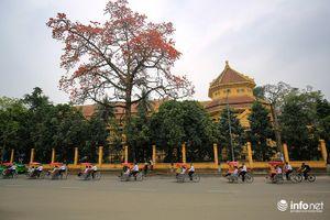 Mê mẩn với mùa hoa gạo tháng 3 ở Hà Nội