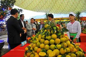 Hòa Bình hỗ trợ nông dân liên kết tiêu thụ cây ăn quả có múi