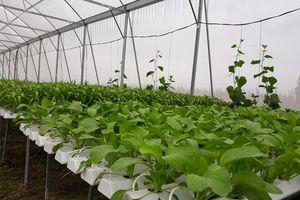 Mô hình trồng rau thủy canh đầu tiên ở Nghệ An