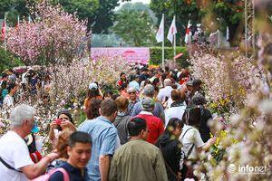 Hàng nghìn người dân Thủ đô chen nhau dự lễ hội hoa anh đào Nhật Bản 2018