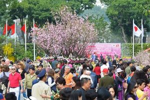 Rộn ràng lễ hội hoa anh đào Nhật Bản 2018 tại Hà Nội