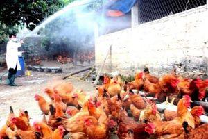 Hà Nội: Chủ động phòng chống cúm A/H7N9 và các virus cúm nguy hiểm
