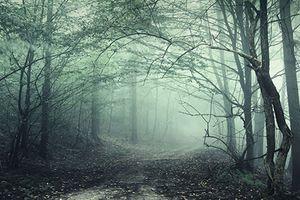 Bí ẩn những khu rừng kỳ lạ nhất thế giới