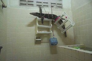 Kỳ đà khổng lồ bỗng dưng chui vào buồng tắm