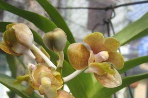 Kỹ thuật trồng hoa lan Vanda phát triển tốt, cho không gian lộng lẫy
