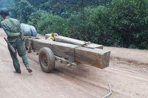 Hà Tĩnh: Để rừng bị tàn phá, Trưởng BQL rừng bị đình chỉ chức vụ