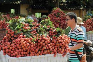 DN xuất khẩu hoa quả sang Quảng Tây cần lưu ý