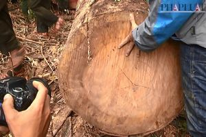 Phó chủ tịch Quảng Nam thị sát rừng Đông Giang bị phá