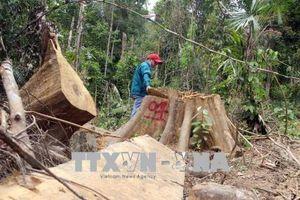 Quảng Nam xử lý nghiêm hai vụ phá rừng tại Đông Giang và Nam Giang