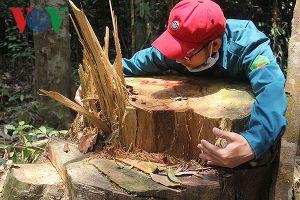 Liên tiếp 2 vụ phá rừng phòng hộ tại Quảng Nam: Do buông lỏng quản lý?