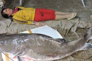 Mua được cá lăng khủng nặng hơn 85kg