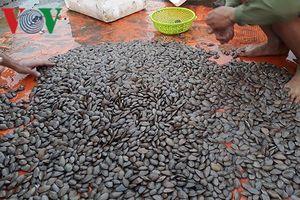 Khai thác tận diệt nhiều hải sản ở Quảng Ninh dần biến mất