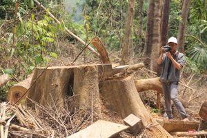 Quảng Nam: Liên tiếp phát hiện nhiều vụ phá rừng phòng hộ quy mô lớn