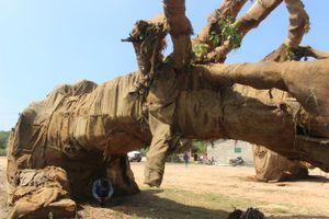 Lộ nguồn gốc một cây 'siêu khủng' di chuyển trên quốc lộ 1