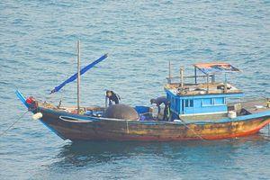 3 cha con dùng thuốc nổ đánh bắt cá trên vịnh Đà Nẵng