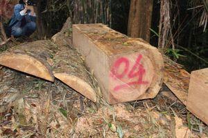 Quảng Nam: Kiểm tra toàn bộ các cơ sở chế biến gỗ