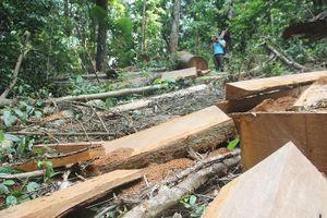 Vụ phá rừng Sông Thanh, kiểm lâm kêu ít người nên quản lý khó